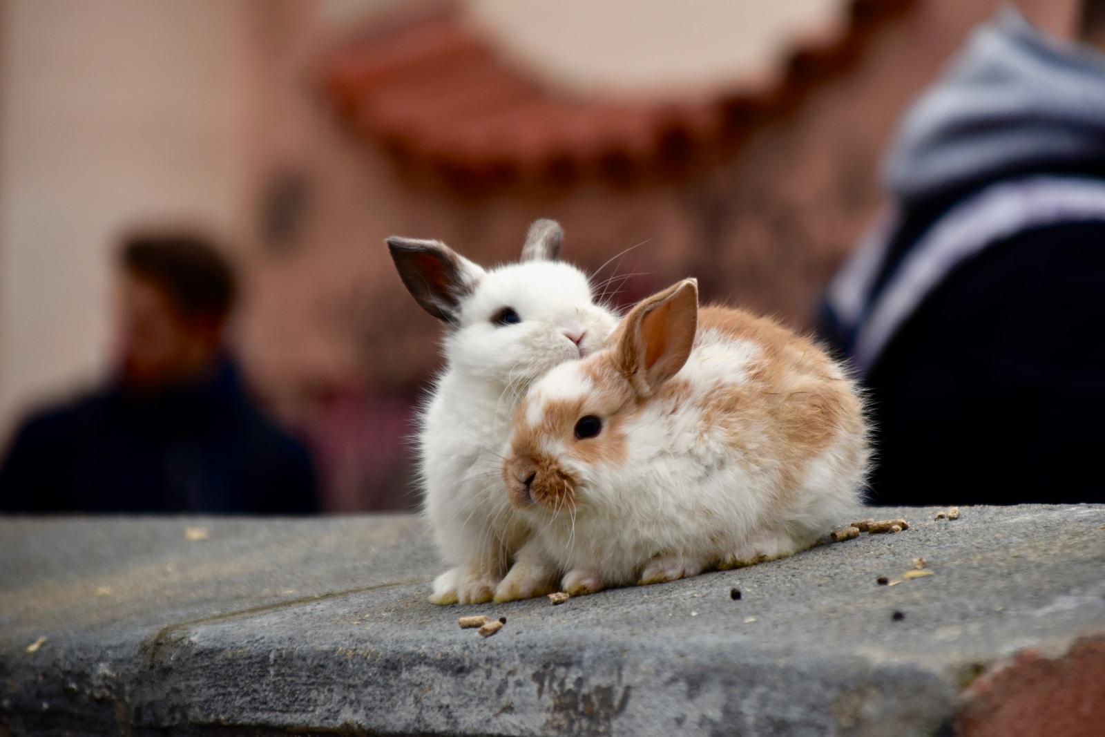 white rabbit on grey concrete floor