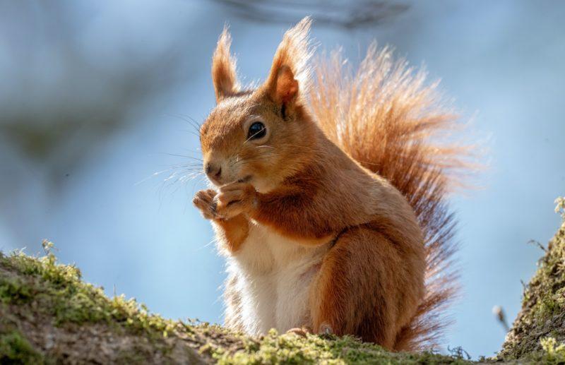 squirrel chipmunk spirit animal virgo
