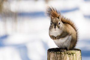 virgo spirit animal squirrel chipmunk